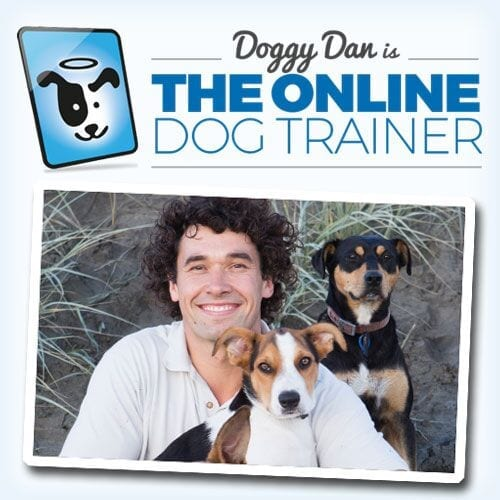 Doggy Dan Online Dog Trainer